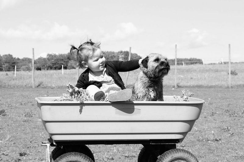 2 year old and dog sitting in a wagon